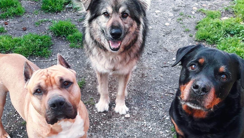 Roka, con dos de los seis perros con los que ha convivido a lo largo de su vida